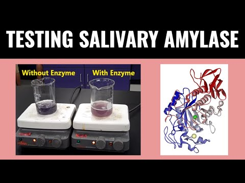 salivary amylase and starch Salivary amylase vs starch - nikita patel created using powtoon.