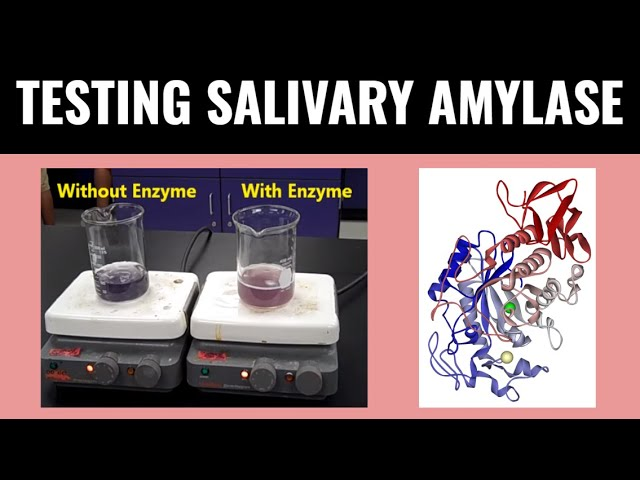 iodine test on enzymes Hello all, looking for feedback on experience doing iodine test on grain-in mashes have read the husk can cause false positivehaving used recommended dosage, temp ranges, and hold time and still not getting negative starch test results (using commercial enzymes.