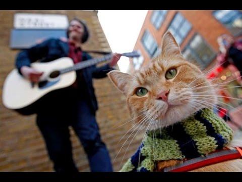 Кот по имени боб описание