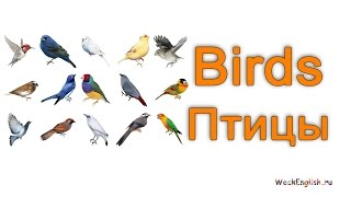 Птицы на английском языке.  English Vocabulary - Birds