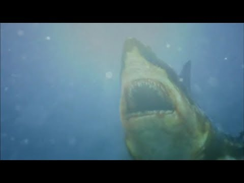 All Creature Effects #6: Toxic Shark