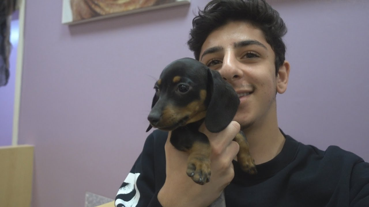 Faze Rug Dog Benji Area Rug Ideas