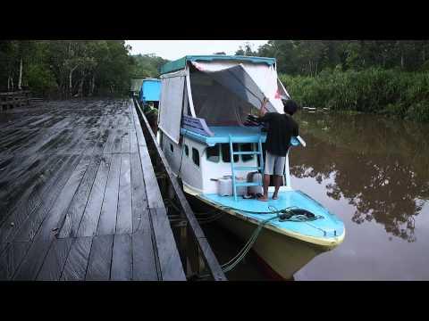 Tanjung Puting - Central Kalimantan, Indonesia