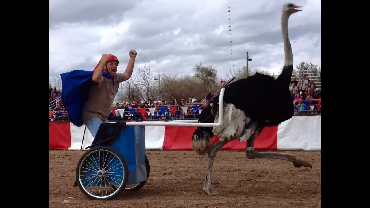 chariots of fire ostrich race march 9 2013 youtube