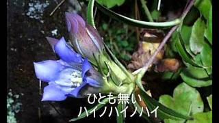 島倉千代子さんの歌をはじめて聴いたのがこの歌「リンドウ峠」でした。...