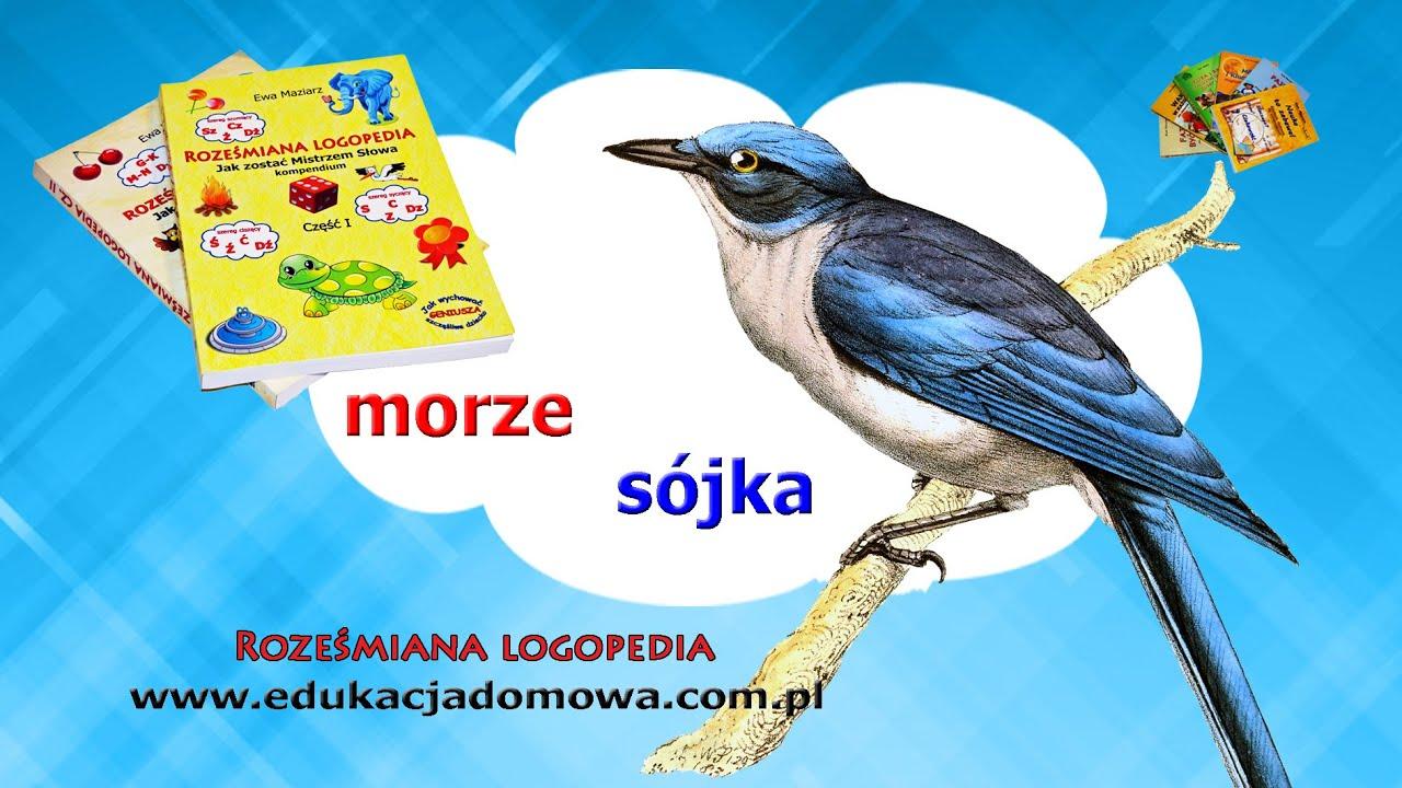 Sójka Jan Brzechwa Roześmiana Logopedia Poleca Wiersze Polskich Poetów