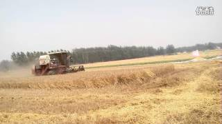 Foton lovol GF40 Wheat harvester in China