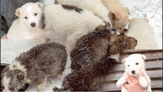 Восемь бездомных месячных щенят нуждаются в помощи  Новосибирск help the animal shelter