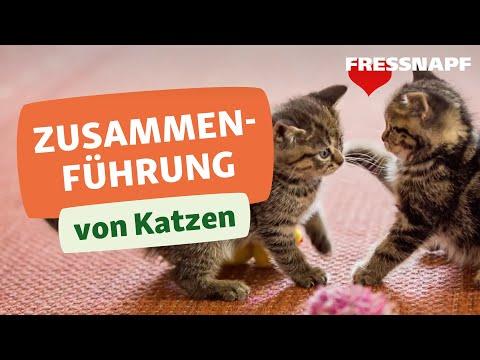 4 Tipps Für Freundschaften Zwischen Katzen | Zusammenführung Von Katzen