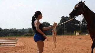 How to teach a horse to kiss
