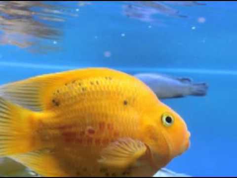 ฝันเห็นปลา