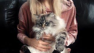 Siberian Cats: Personalities