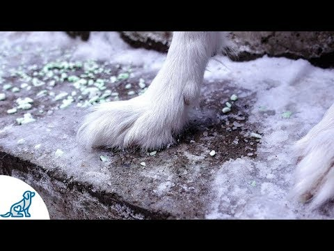 Dog Paw Tips For Winter - Professional Dog Training Tips