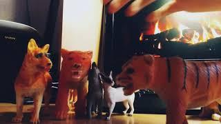 Обзор на мои фигурки животных)