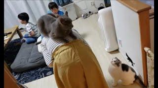 白モフ猫もママの背に乗る?と思いきや・・(ママのスッポコポン♪)