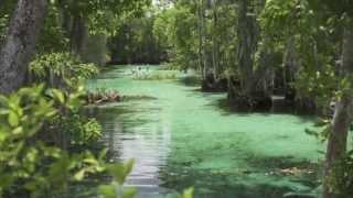 Visit Citrus County Florida