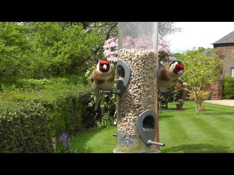 birds-in-an-english-cottage-garden