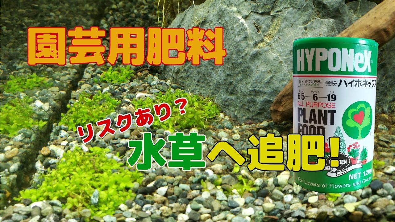 【水草水槽】#4 園蕓用肥料を水草へ追肥してみた - YouTube