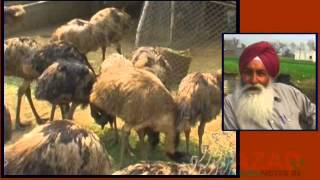 Punjab Farmer Starting EMU Farm
