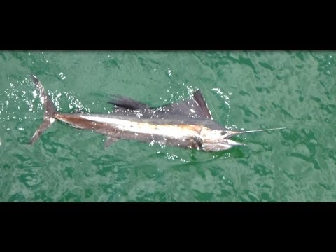 Double sailfish hook-up at Russell-Fields pier in Panama City Beach