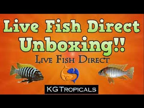 Live fish direct unboxing 20 off your order plus 10 for Order fish online