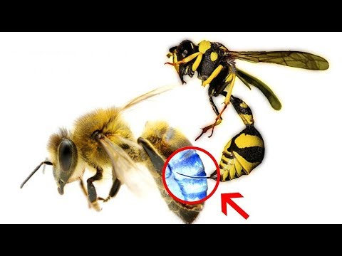 Can A Bee Sting A Bee? |Hindi-Urdu|Wisdom Unfolded