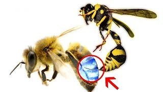 Can a Bee Sting a Bee? | Hindi-Urdu