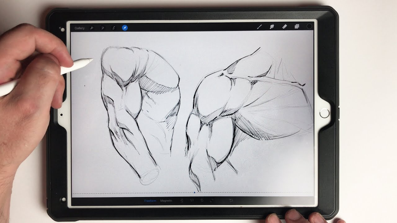 Drawing Straight Lines In Notability : How to draw the shoulder and chest muscles ipad pro