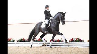 Zenon - Stallion Collection Schockemoehle & Helgstrand 2021 ENG