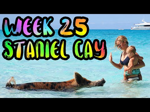 BAHAMAS!! Swimming Pigs and Hammerhead Sharks!! /// WEEK 25 : Staniel Cay and Bimini, Bahamas