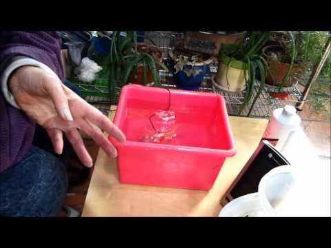 Goldfish Epsom Salt Bath MOV