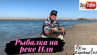 Рыбалка на реке Или осень 2020 сазан судак жерех сом