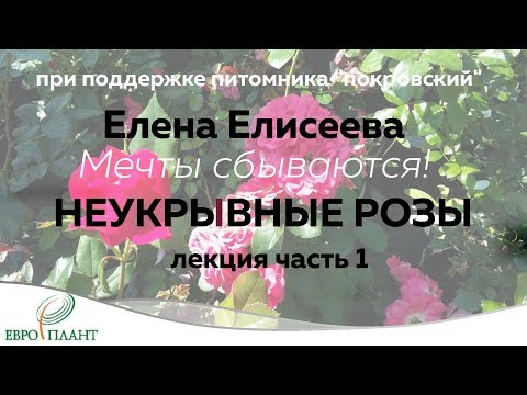 Елена Елисеева. Неукрывные розы. часть1.