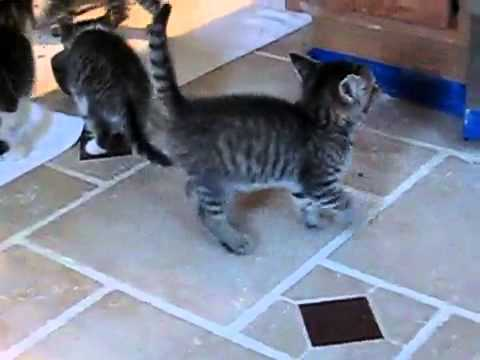 Super cute kittens meow cause they are hungry!