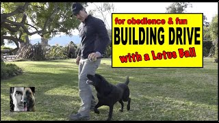 Building Drive in Dog Training - Using a Lotus Ball for Reward