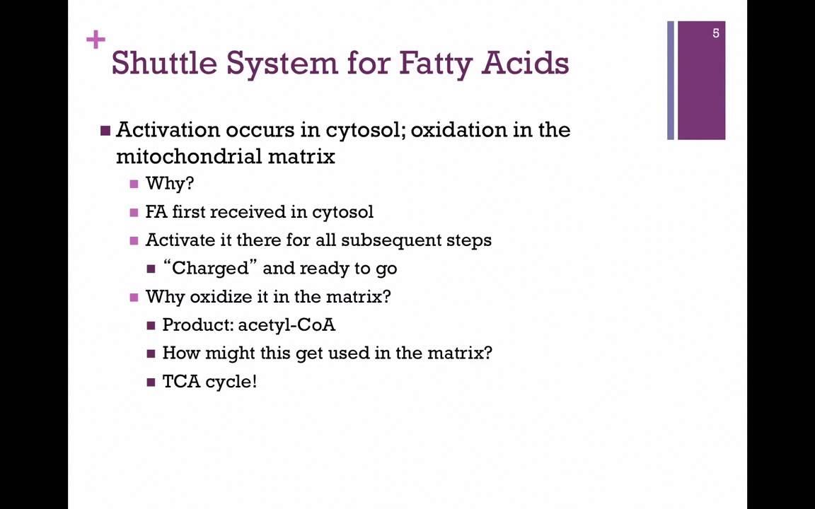 activation of fatty acids occur