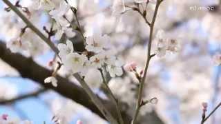日根荘 春