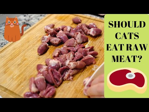 Should Siberian Cats eat raw meat?