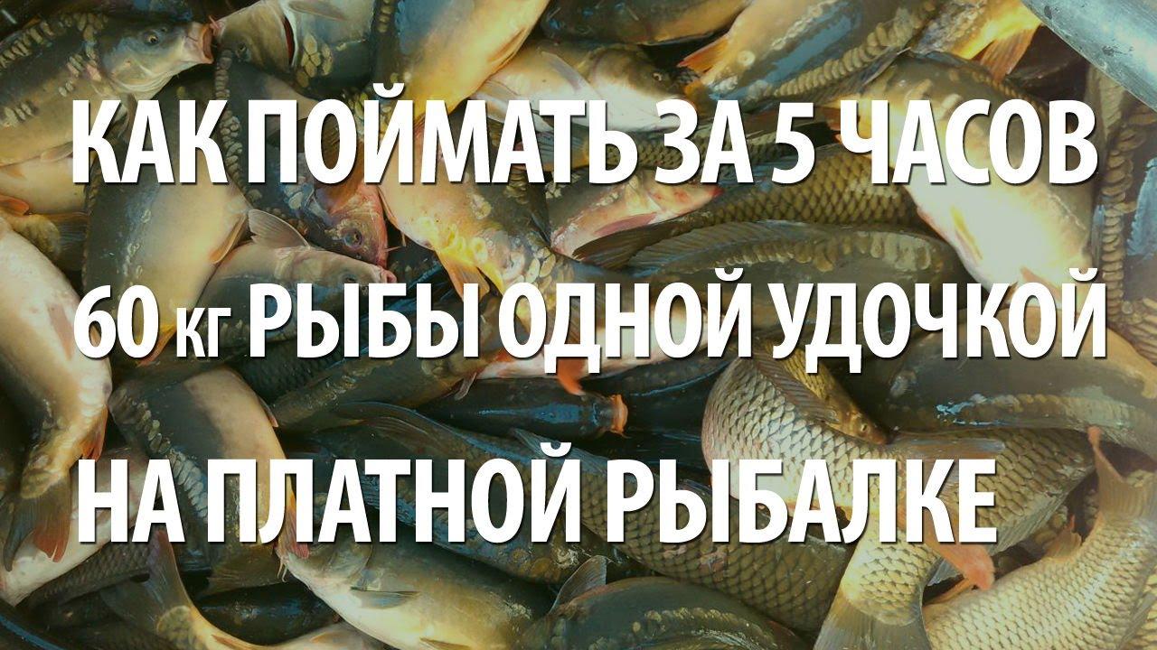 на удочку какие рыбы клюют