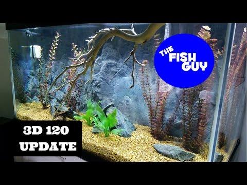 3d 120 Update - NEW FISH!  Paratilapia Bleekeri