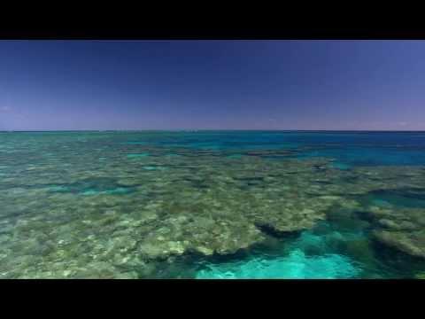 Ocean Acidification - Revolution World Issue