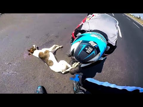 BIKERS TRIED TO SAVE INJURED DOG   BIKERS ARE NICE    [Ep. #45]