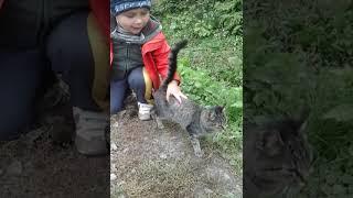кошка бежит за нами♥