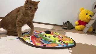 猫とキャッチミーイフユーキャン2