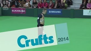 Obedience Dog Championships - Part 3 | Crufts 2014