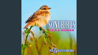 Yellowhammer: Song