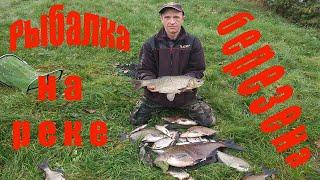 Ловля фидером леща на реке Рыбалка на Березине Ночная рыбалка на реке Березина
