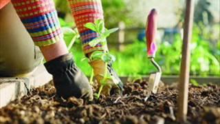 И в саду, и в огороде - 15.05.17 Советы садоводам
