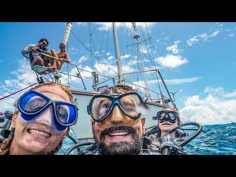 Ocean Conservation, Turtles and SHIP WRECKS! Sailing Vessel Delos Ep.185