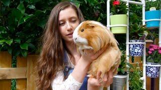 MEET MY GUINEA PIGS | August 2016
